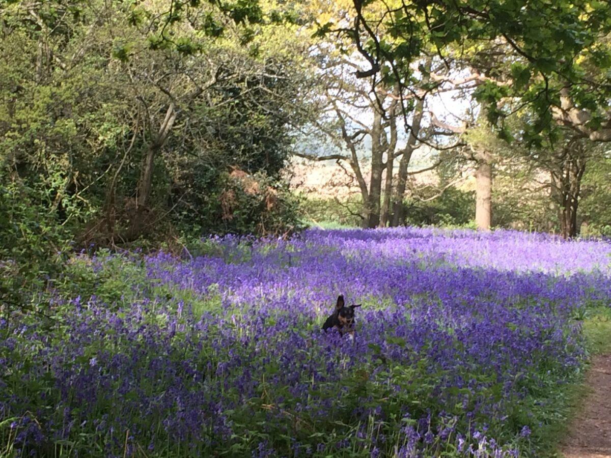Hillhouse Wood, West Bergholt, Colchester large photo 1