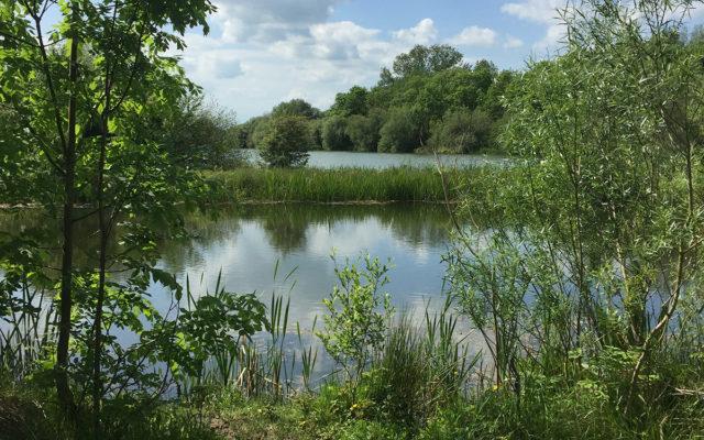 Hinchingbrooke Country Park Dog walk in Huntingdonshire