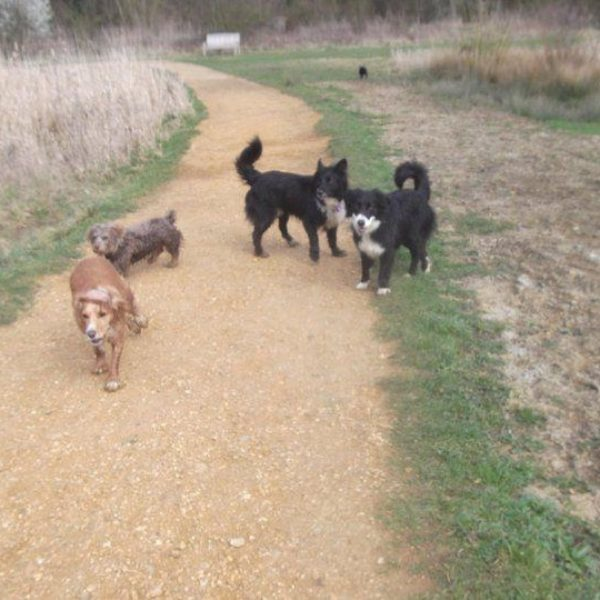 Dog walk at Hinchingbrooke Country Park
