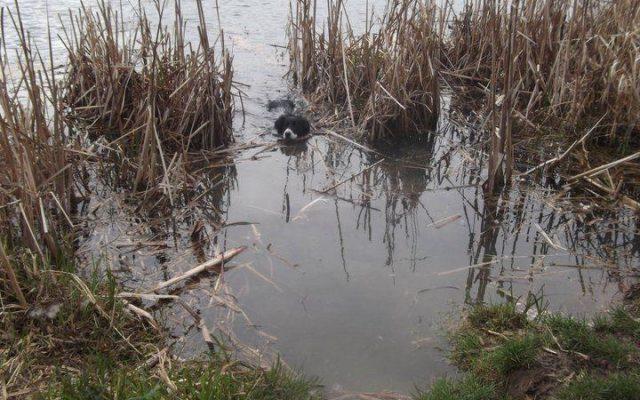 Hinchingbrooke Country Park Dog walk in Cambridgeshire