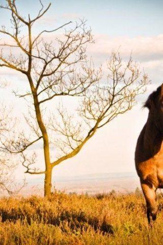 Dog walk at Hindehead Common / Devils Punchbowl photo