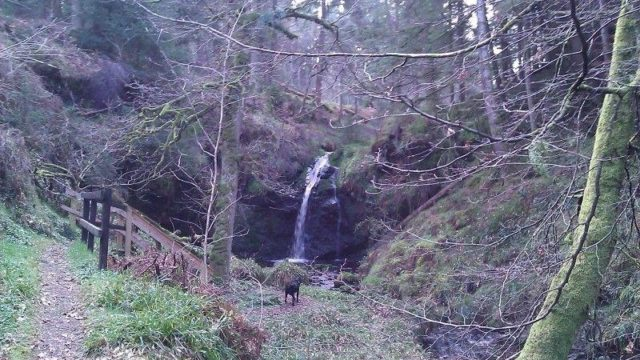 Dog walk at Hindhope Linn - Blakehopeburnhaugh