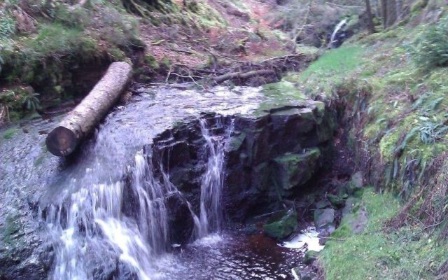 Hindhope Linn - Blakehopeburnhaugh Dog walk in Northumberland