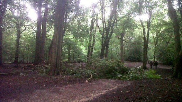 Dog walk at Hirst Wood, Bingley