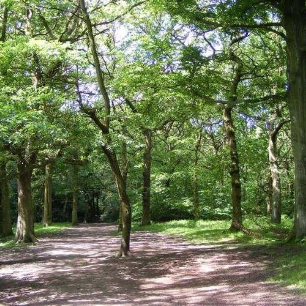 Dog walk at Hirst Wood, Bingley