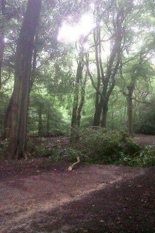 Dog walk at Hirst Wood, Bingley photo