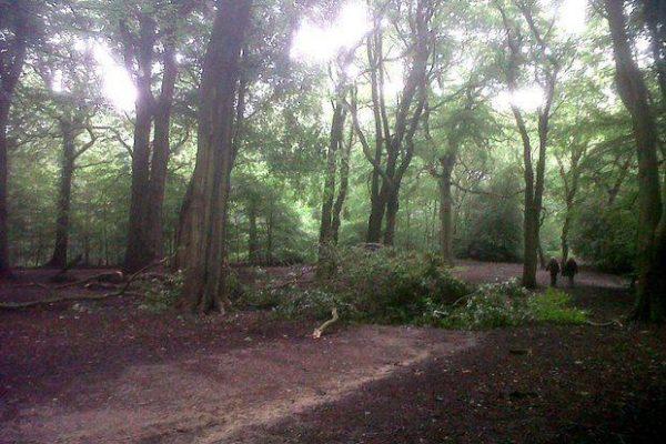 Hirst Wood, Bingleyphoto