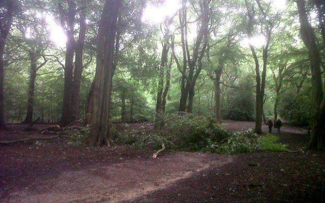 Hirst Wood, Bingley Dog walk in Yorkshire (West)