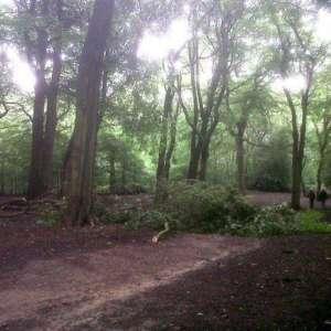 Hirst Wood, Bingley