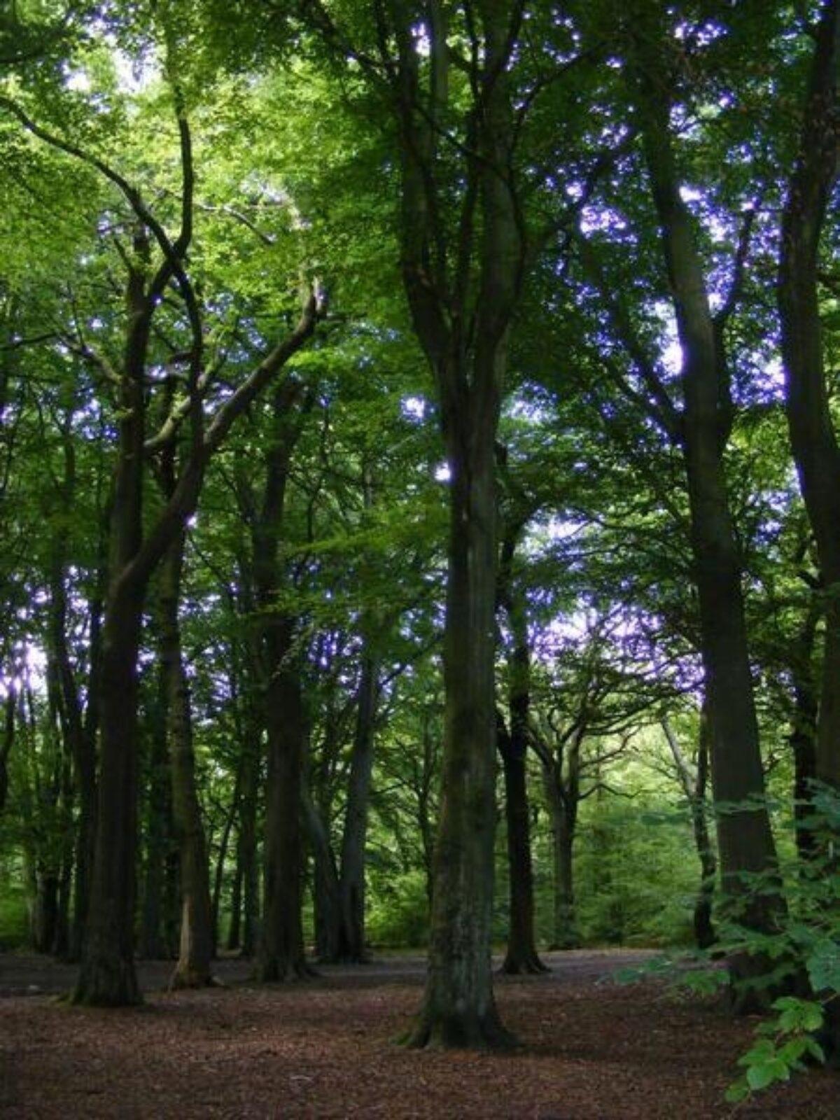 Hirst Wood, Bingley large photo 2