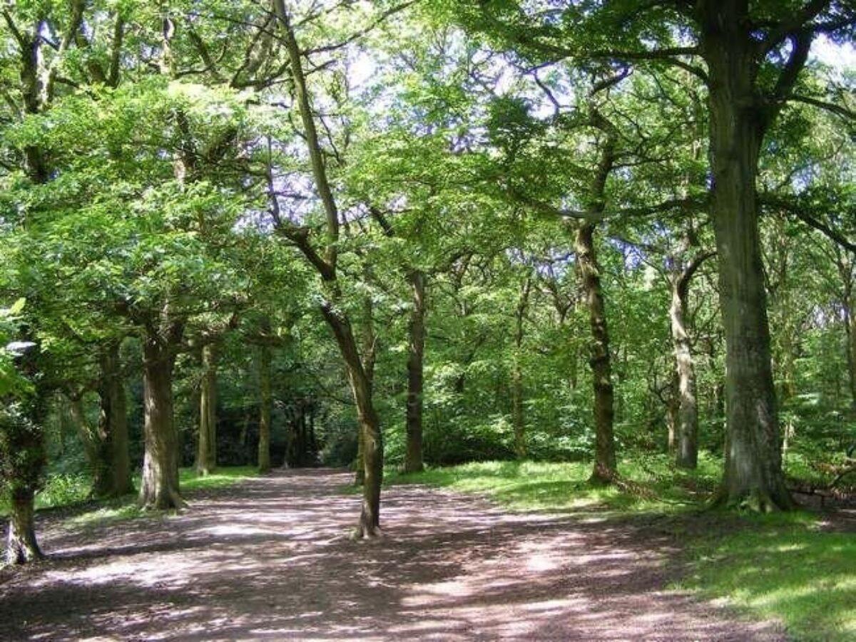 Hirst Wood, Bingley large photo 3