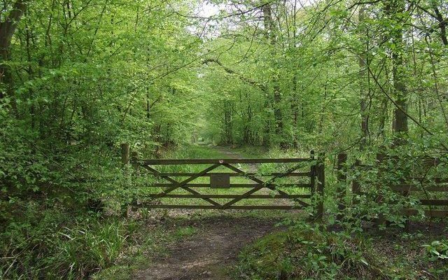 Hoddesdon Woods Dog walk in Hertfordshire