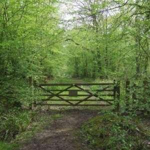 Hoddesdon Woods