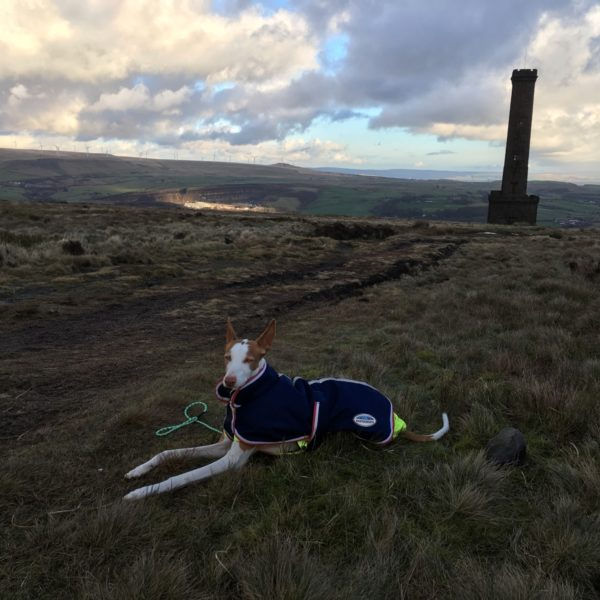 Dog walk at Holcombe Hill, Lancashire