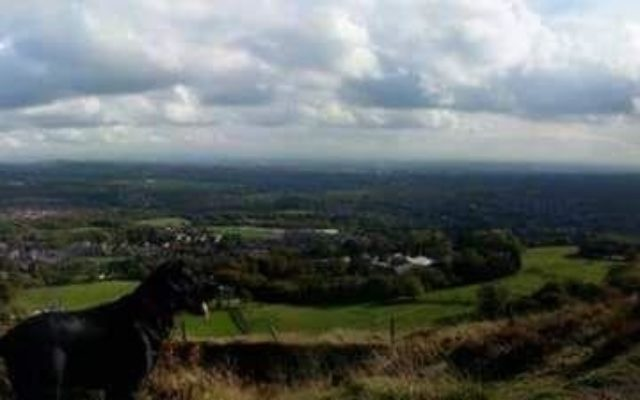 Holcombe Hill Dog walk in Lancashire