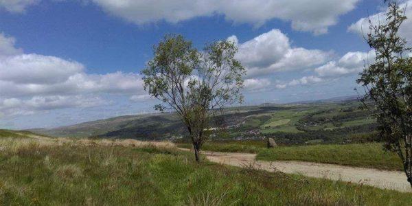 Kingmoor  Nature Reserves