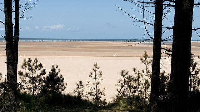 Dog walk at Holkham Beach, North Norfolk