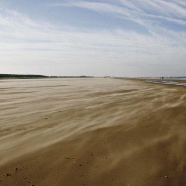 Dog walk at Holkham Beach, North Norfolk