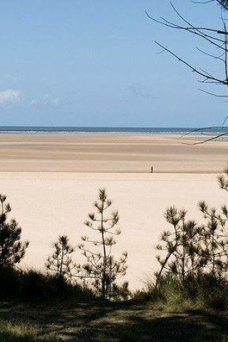Dog walk at Holkham Beach, North Norfolk photo