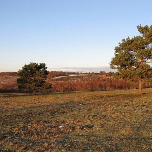 Dog walk at Hollies Loop, Ashdown Forest
