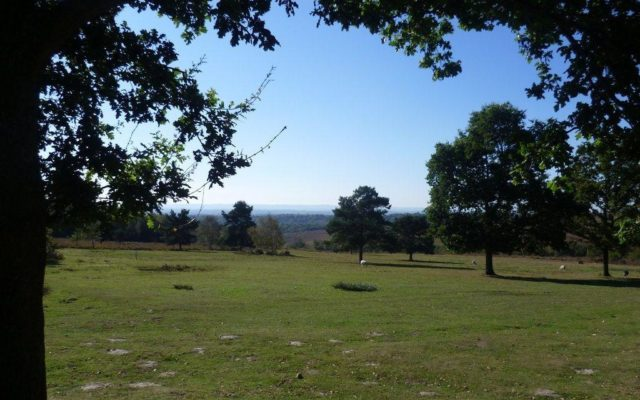Hollies Loop, Ashdown Forest Dog walk in Sussex (East)