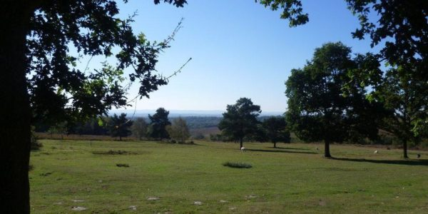 Hollies Loop, Ashdown Forest