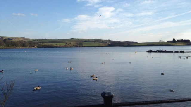 Dog walk at Hollingworth Lake Country Park