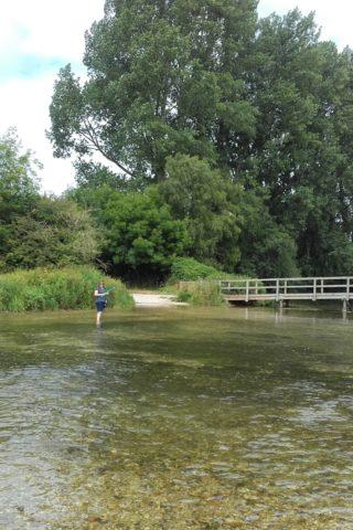 Dog walk at Horsebridge - King Somborne Amble photo