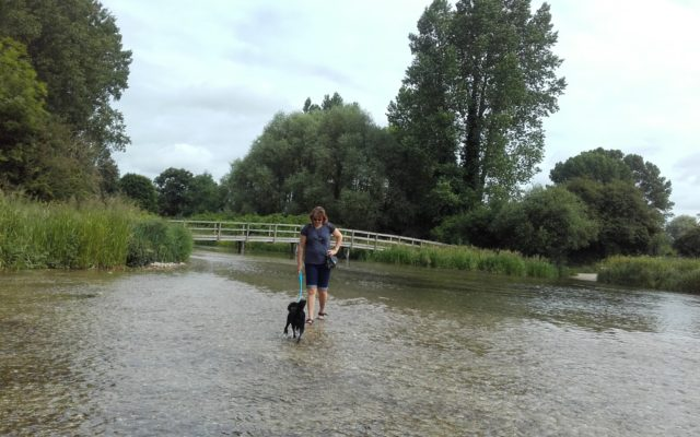Horsebridge - King Somborne Amble Dog walk in Hampshire