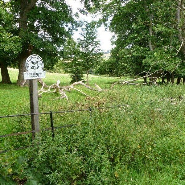 Hughenden Park And Manor photo 1