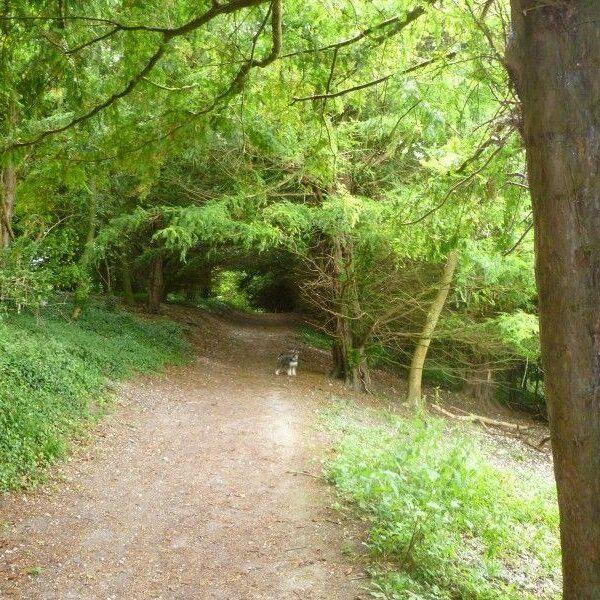 Hughenden Park And Manor photo 2