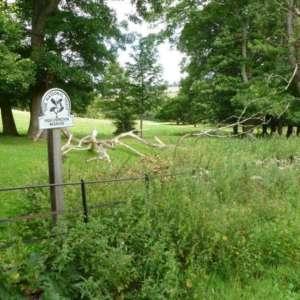 Hughenden Park And Manor