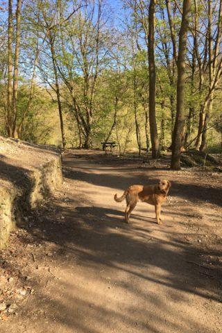Dog walk at Humber bridge nature reserve photo