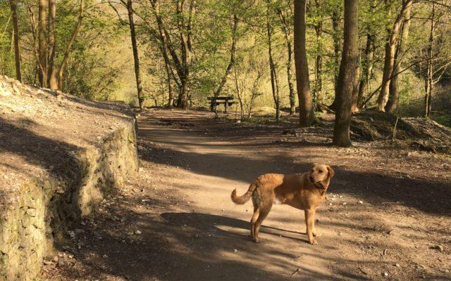 Humber bridge nature reserve Dog walk in Humberside (North)