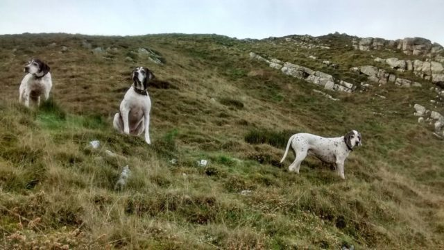 Dog walk at Hurlestone Point