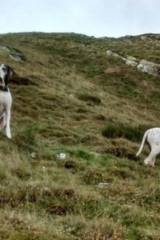 Dog walk at Hurlestone Point photo