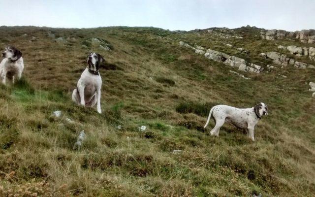 Hurlestone Point Dog walk in Somerset