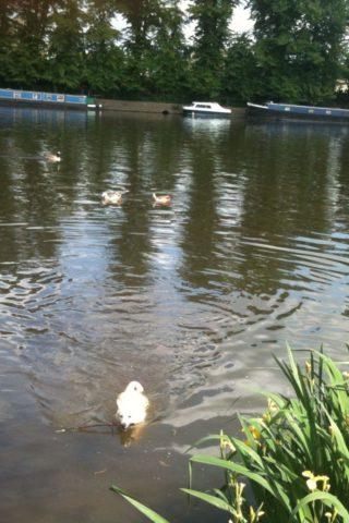 Dog walk at Hurst Park River Walk photo