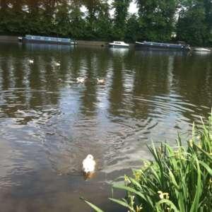 Hurst Park River Walk