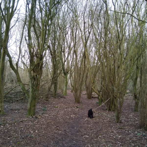 Dog walk at Hurstbourne Tarrant