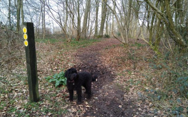 Hurstbourne Tarrant Dog walk in Hampshire