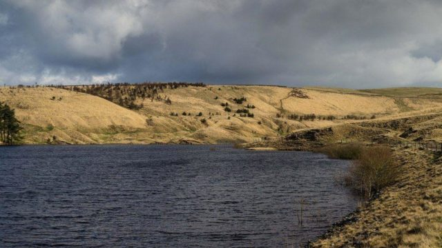 Dog walk at Hurstwood Reservoir