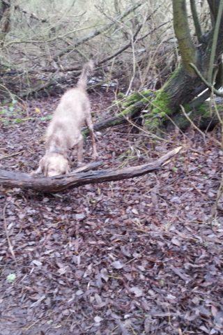 Dog walk at Hyde Lane photo
