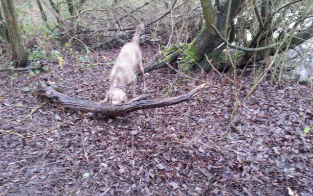Hyde Lane Dog walk in Hertfordshire