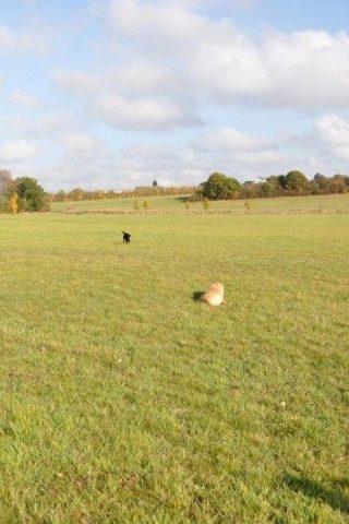 Dog walk at Hylands Park photo