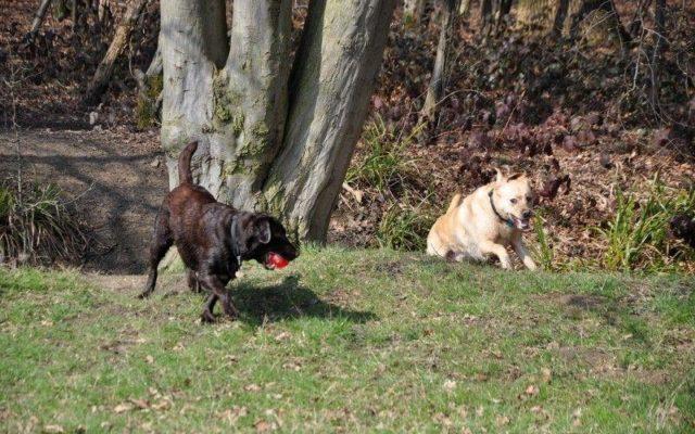 Hylands Park Dog walk in Essex