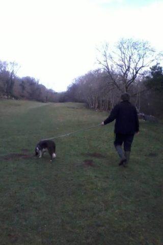 Dog walk at Hyning Scout Wood photo