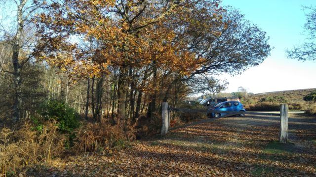 Dog walk at Ibsley Plateau, New Forest