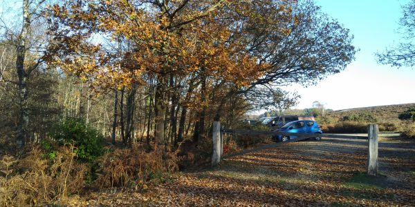 Ibsley Plateau, New Forest