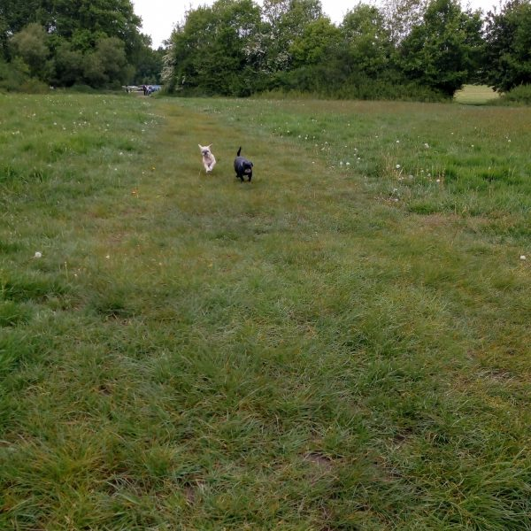 Dog walk at Itchen Valley Country Park
